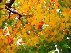 木の下から覗くとこんな感じです。