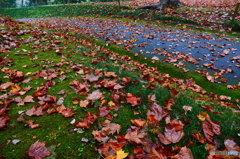 枯れ葉の流れる川の様でした(^O^)