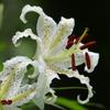 里山の白い花