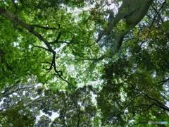 春の森・・樹々たちのサミット
