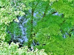 新緑から深緑の季節へ