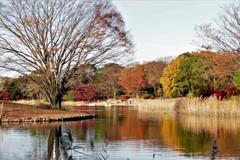 池の端の色づき