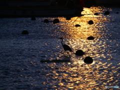 夏・・夕景に浮かぶ影たち