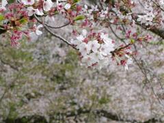 密に咲く花