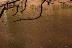 晩秋の池…蒔絵のように