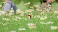 人と花と蝶と・・・