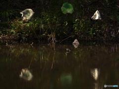 秋・・静寂の蓮池にて
