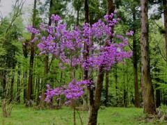 高木の下で彩を添えて咲く花