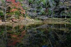 池の中で美しく・・・