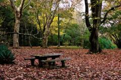 落ち葉の広場に黄葉の明かり