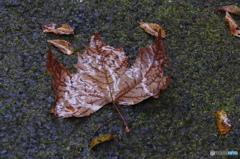 大きなぬれ落ち葉がありました。
