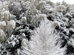 千葉・・・雪が降った時