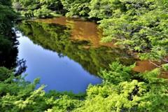 緑に満ちて…(^O^)
