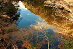秋から冬へ・・里山の池