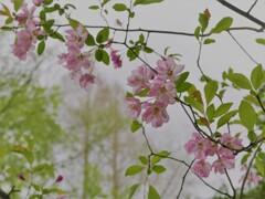 里山に咲く花