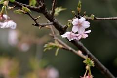 陽気につられて小さな春を見つけました(^-^)