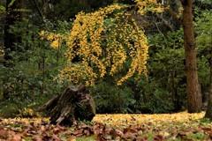 森の明かり…木々の語らい