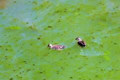 こんな池でも・・・って人間だけの感覚でしょうかね?