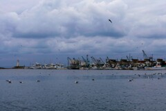 嵐の海・鳥と船の安堵の港