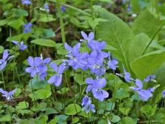 足元の花たち