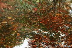 極彩の水面