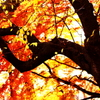 秋、力強く