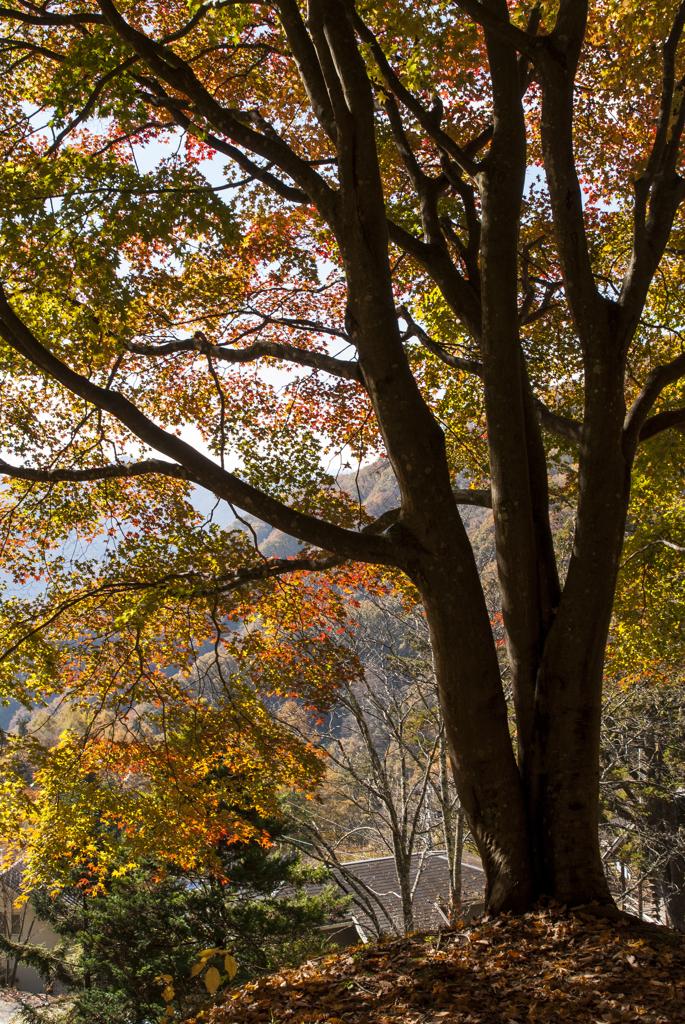 日川渓谷 紅葉