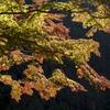 奥多摩湖 紅葉7