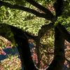 奥多摩湖 紅葉1