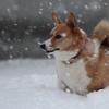 新雪の喜び