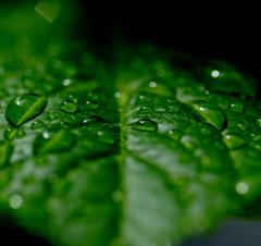 緑の舞台。。
