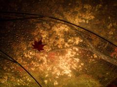 傘の上の紅葉
