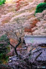 四季桜のある風景 *2