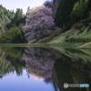reflection 桜2017' #2