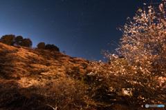 四季桜と紅葉と