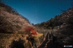 四季桜のある風景 *3