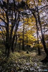 Autumn colors 2019'  ②