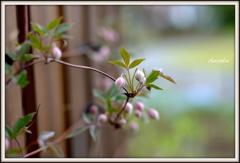 咲く時を待つ