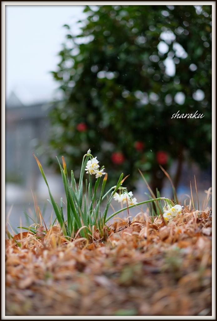 春の散歩路 ⑭