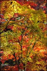 平林寺の紅葉⑤