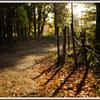 11月の散歩道 ㉛