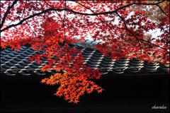 平林寺の紅葉④