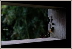 秋を覗く窓
