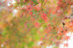 清澄庭園の紅葉 2014ver.