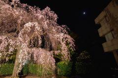 ヒルサイドテラスの夜桜