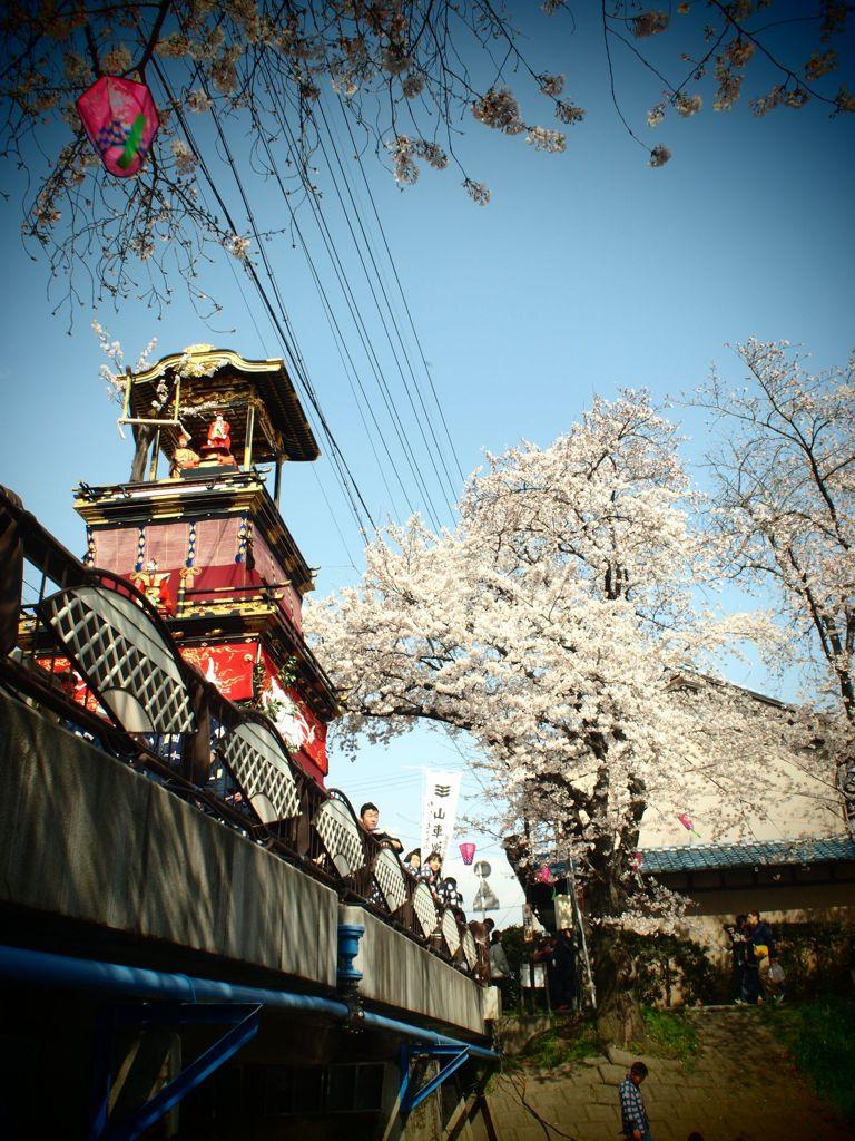 岩倉・桜まつり