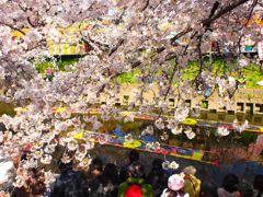 五条川の桜 #4