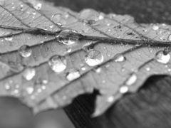 雨の終着駅