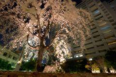 夜桜レジデンス