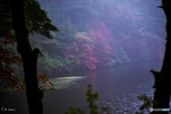 霧に覆われた白駒の紅葉2